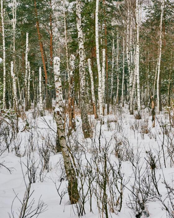 W krzakach, czyli zdjęcie w lesie